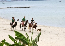 La Cruz beach. horses on the beach