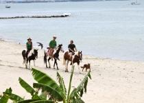 La Cruz beach. horses on the beach